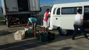 Peixes apreendidos em operação do Ibama e da Polícia Militar Ambiental são doados