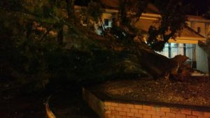 Árvore caída em SL