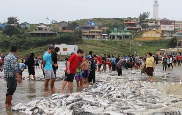 Pesca da tainha Farol de Santa Marta, em Laguna