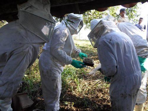 Apicultores de Orleans participam de oficina sobre manejo de colmeias para o inverno2