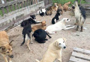 Três cães são mortos e quatro ficam feridos após invasão a canil, em Laguna