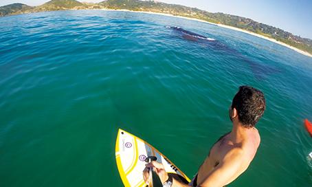 Empresário de Tubarão registra encontro com baleias