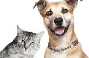 Prefeitura de Orleans e Unibave realizarão castração gratuita de cães e gatos