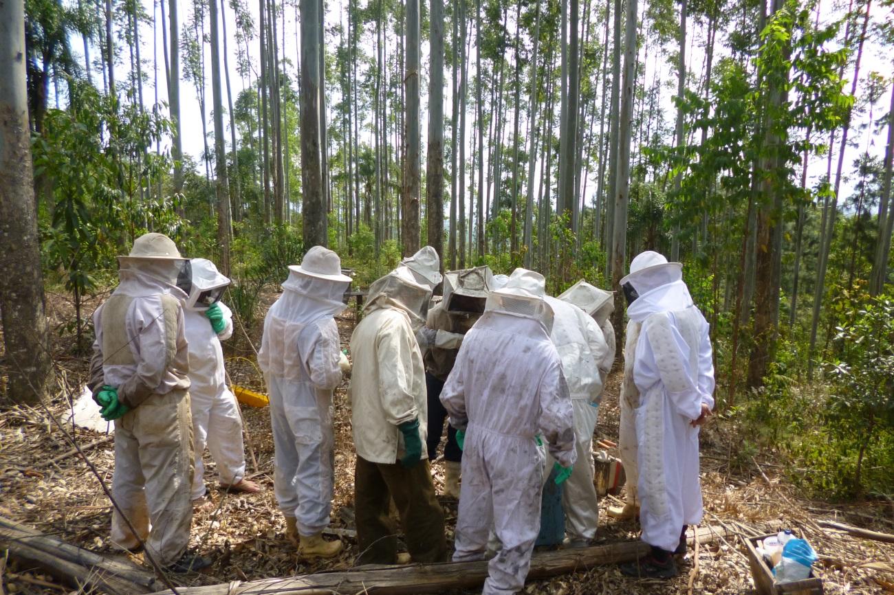 Apicultores de Orleans preparam colmeias para aumentar a produção de mel4