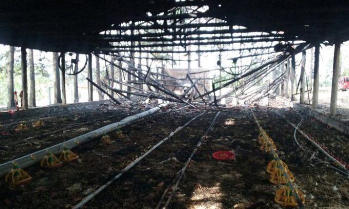 Avicultor de Urussanga tem prejuízo de R$ 60 mil após incêndio