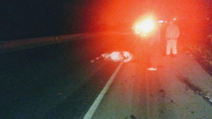 Manada de búfalos invade BR-101 e provoca acidente