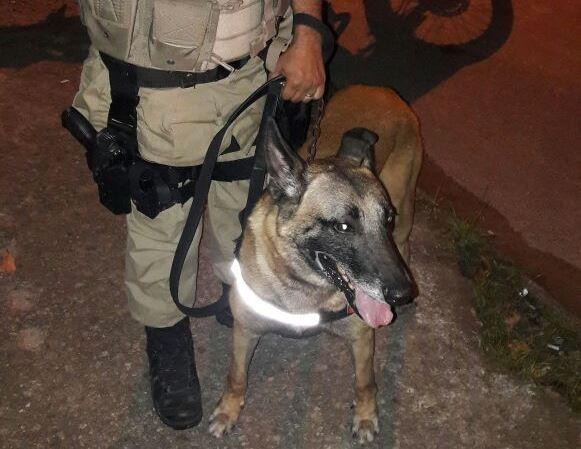 Cães atuam em prisões e apreensão