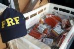 Mais de 200 quilos de produtos sem refrigeração são apreendidos na BR-101, em Araranguá