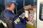 Mais de 200 quilos de produtos sem refrigeração são apreendidos na BR-101, em Araranguá4