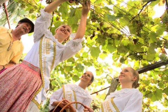 Vindima enaltecerá 120 anos do cultivo da uva Goethe na região