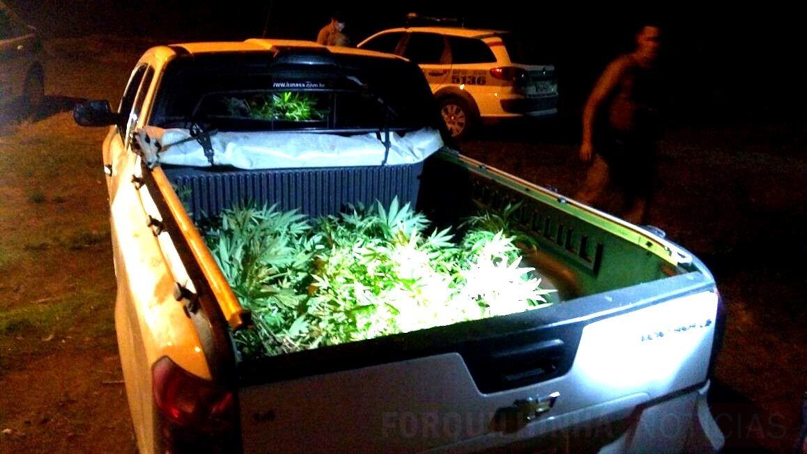 Jovem é flagrado com armas, carro furtado e plantação de maconha em Forquilhinha7