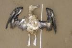 Animais na orla (3)