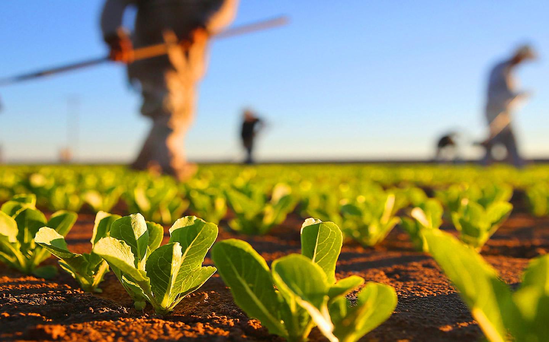 Resultado de imagem para agricultura